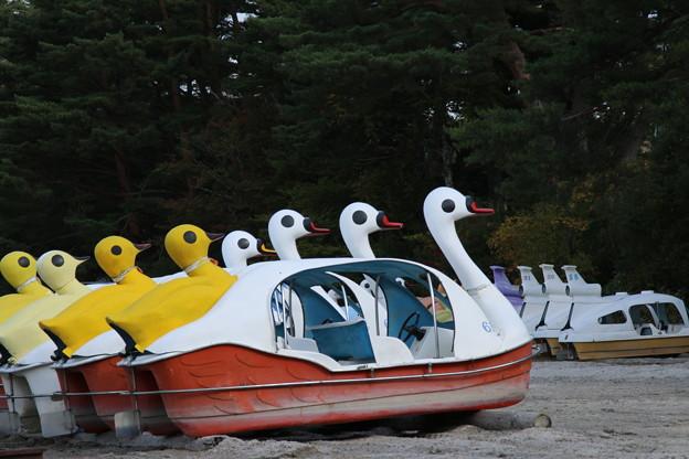スワンボート_田沢湖 D3431