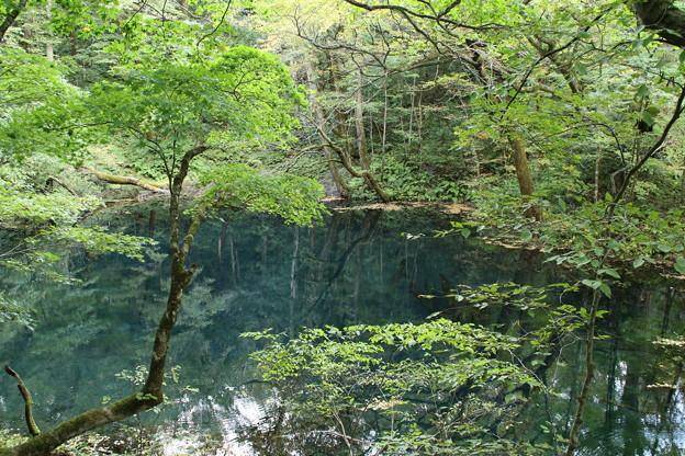 沸壷の池_青森 D3599