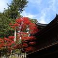Photos: 紅葉_日光 D3950