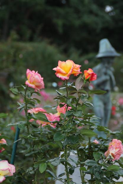 秋の薔薇_前橋 D3924