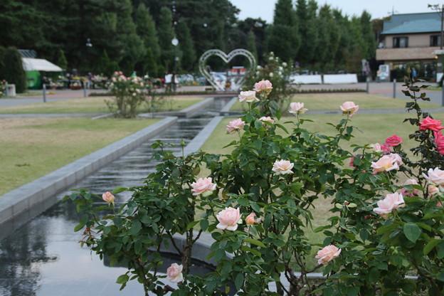 敷島ばら園_前橋 D3929
