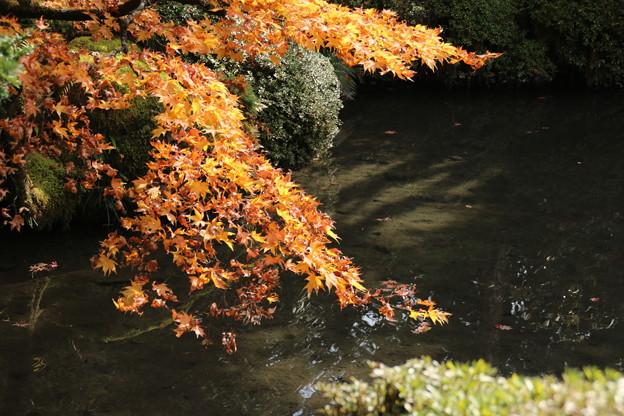 Photos: 輪王寺_日光 D3968