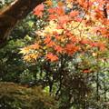 Photos: 輪王寺_日光 D3969