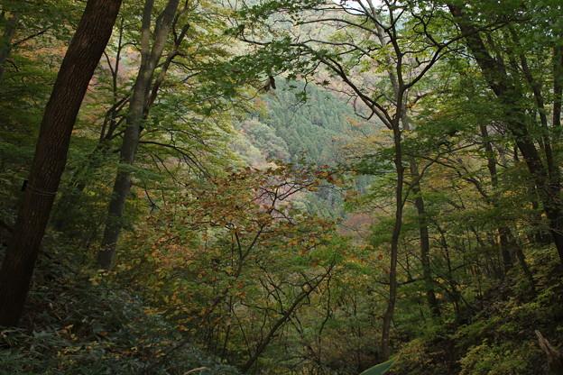 霧降の滝へ_日光 D4057