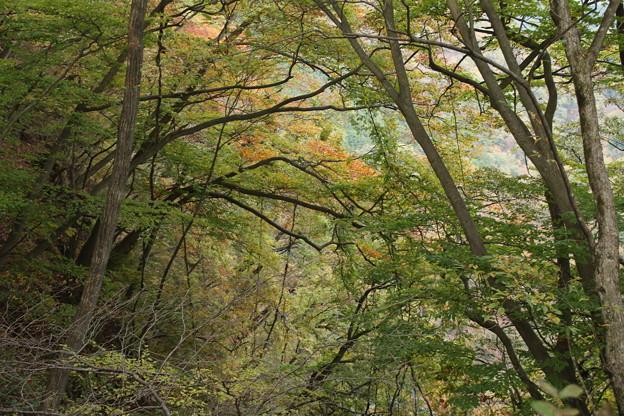 霧降の滝へ_日光 D4058