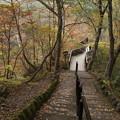霧降の滝へ_日光 D4061