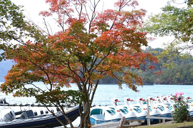 紅葉_十和田湖 D3839