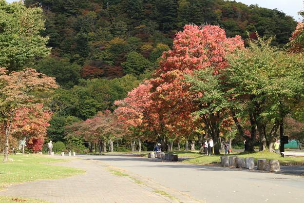 紅葉_十和田湖 D3840