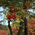 Photos: 紅葉_十和田湖 D3842