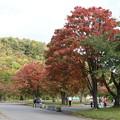 紅葉_十和田湖 D3841