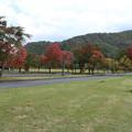 公園_十和田 D3844
