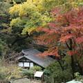 紅葉_川崎 D4287