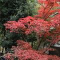 紅葉_川崎 D4293