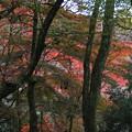紅葉_川崎 D4302