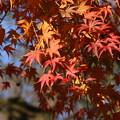 Photos: 紅葉_公園 D4330