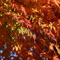Photos: 紅葉_公園 D4331