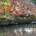 Photos: 紅葉_公園 D4336