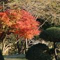 Photos: 紅葉_公園 D4340