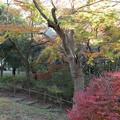 紅葉_公園 D4345