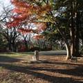 紅葉_公園 D4346