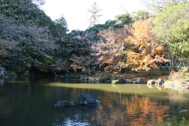 紅葉_公園 D4365