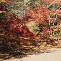 紅葉_公園 D4381