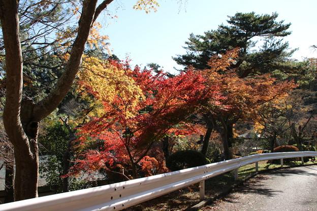 紅葉_公園 D4385