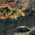 紅葉_公園 D4387