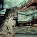 Photos: 狛犬_神社 D4603