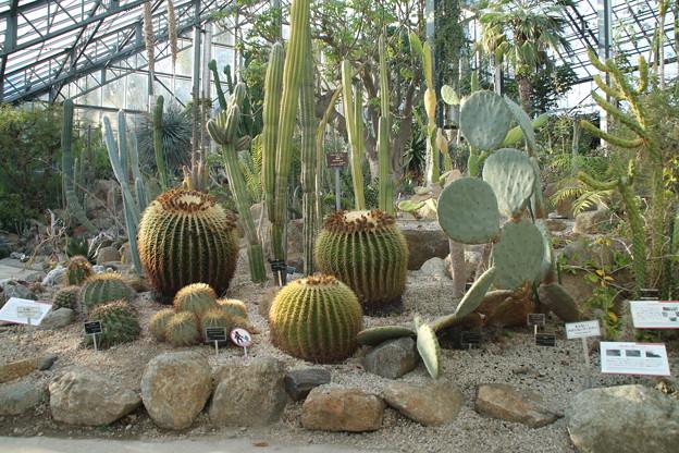 サボテン_植物園 D4830
