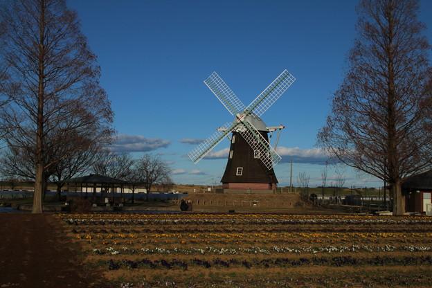 風車_公園 D4865
