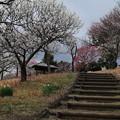 梅林_公園 D5021