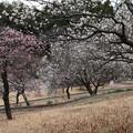 梅林_公園 D5023