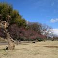 あけぼの山_公園 D5062
