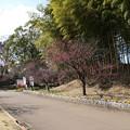 あけぼの山_公園 D5063