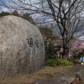 櫻木神社 D5067