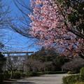 櫻木神社 D5068