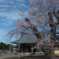 桜_歓喜寺 F4003