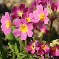 Photos: 花壇の花 D5228