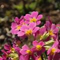 Photos: 花壇の花 D5230