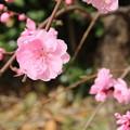 Photos: 遊歩道の花 D5281