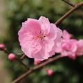 Photos: 遊歩道の花 D5282