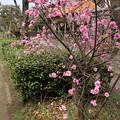 Photos: 遊歩道の花 D5283