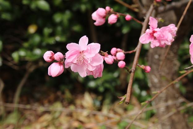 遊歩道の花 D5284
