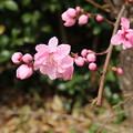 Photos: 遊歩道の花 D5284