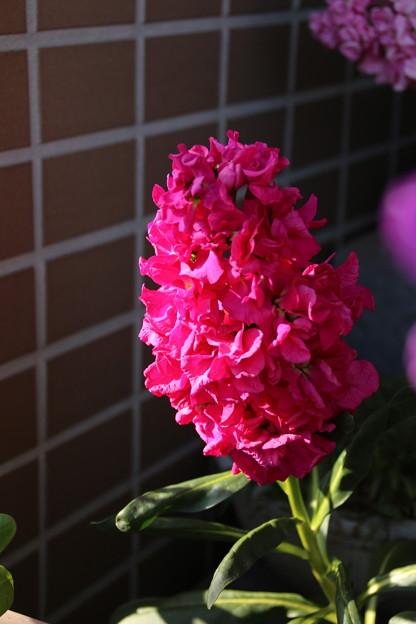 ストック_花壇 D5258