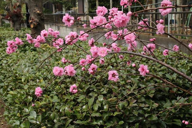 遊歩道の花 D5285