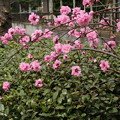 Photos: 遊歩道の花 D5285
