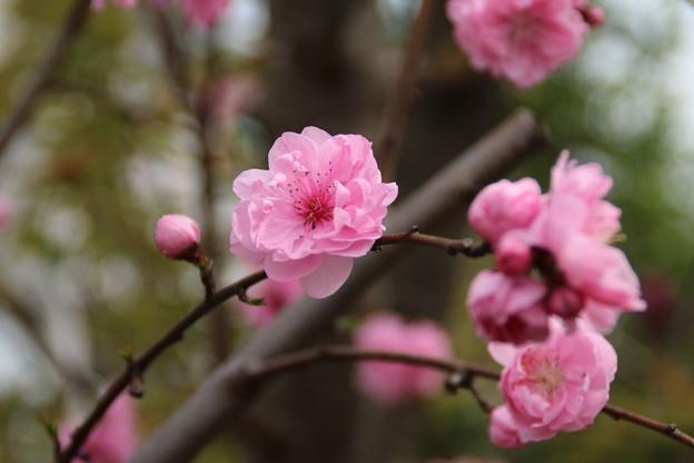 遊歩道の花 D5286