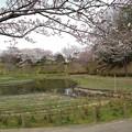 Photos: 桜_公園 K146